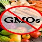 What is GMO and Why Is It Important You Know?