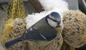 Attract back yard birds with homemade feeders